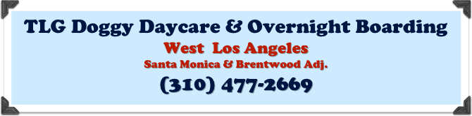 TLG Doggy Daycare & Overnight Boarding 